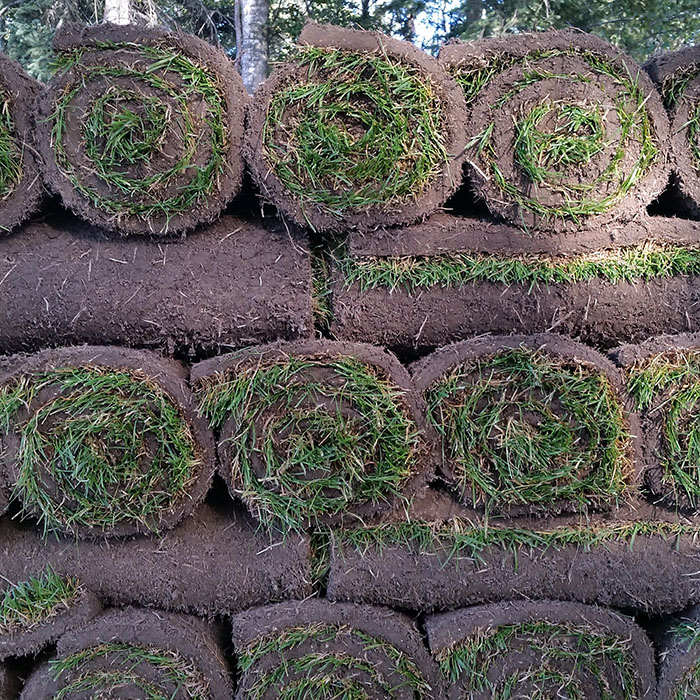 Turfgrass sod small roll pallet 2